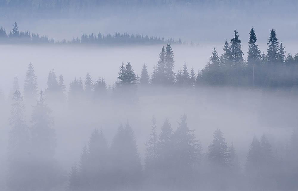 002.3. Bogdan Horia. Padurea din ceata (Muntii Apuseni)