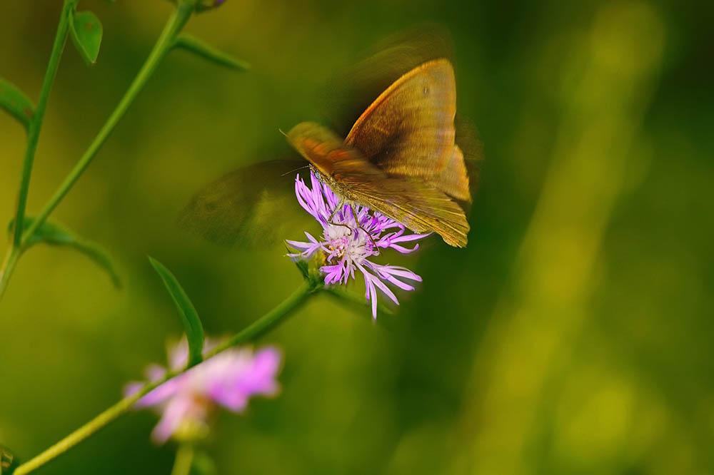 006.2. suciu aurelian liviu, butterfly effect (lacul tei, bucuresti)