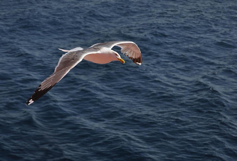 010.3. badut anca.  marina (marea egee)