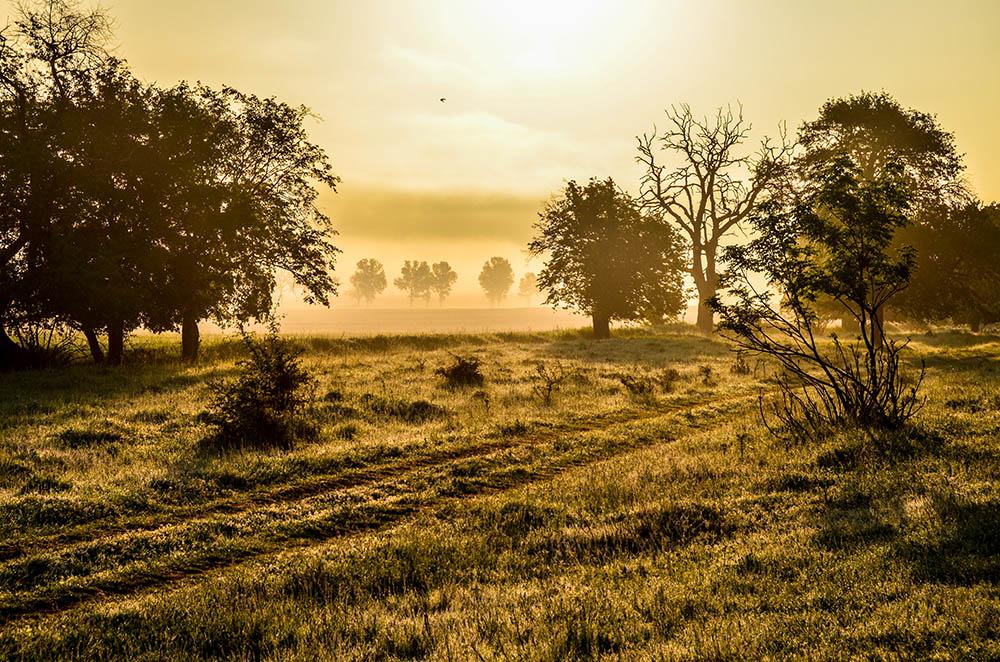 013.1. Cindie Oana. Western Fog (Dobrogea, Pădurea Babadag)
