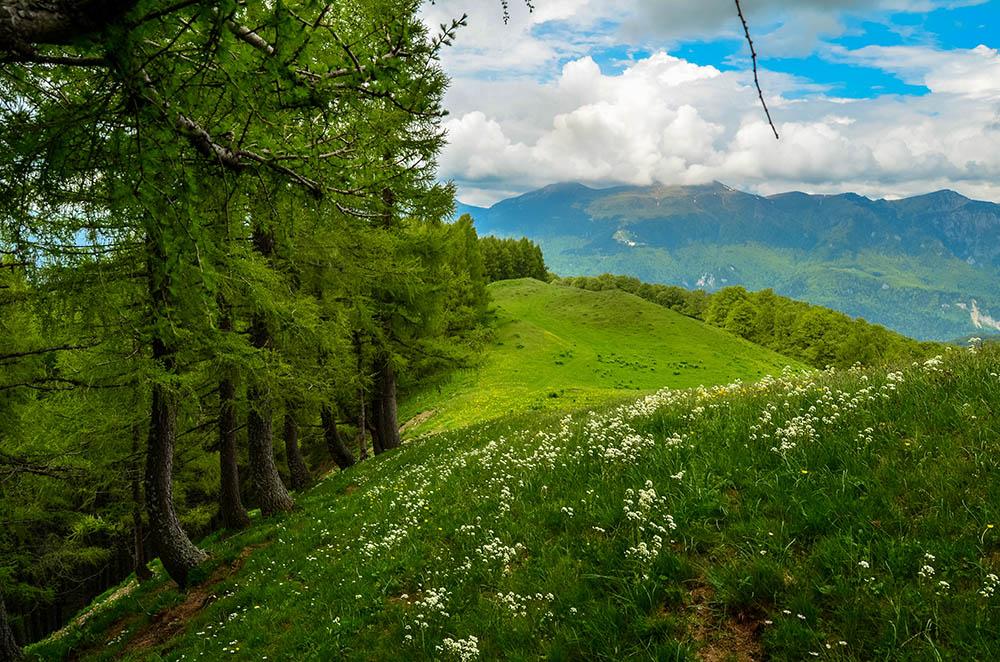 013.3.Cindea Oana. Into the Wild (Muntii Baiului, urcare din Busteni, vedere spre Muntii Bucegi)