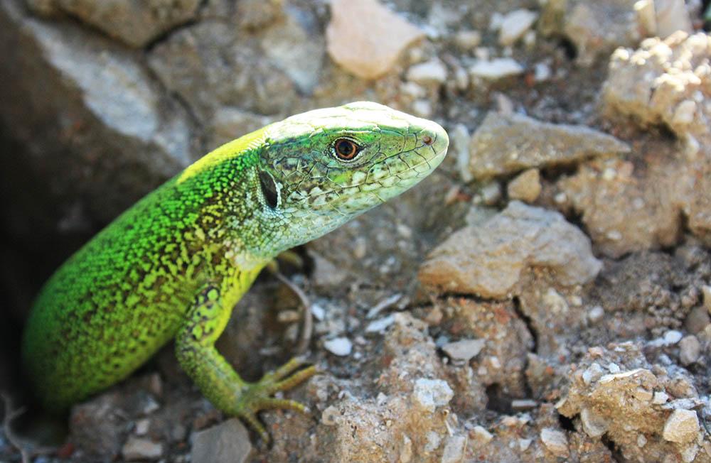 015.3. buta roxana maria. aprins, verde (com. racos, jud. brasov)