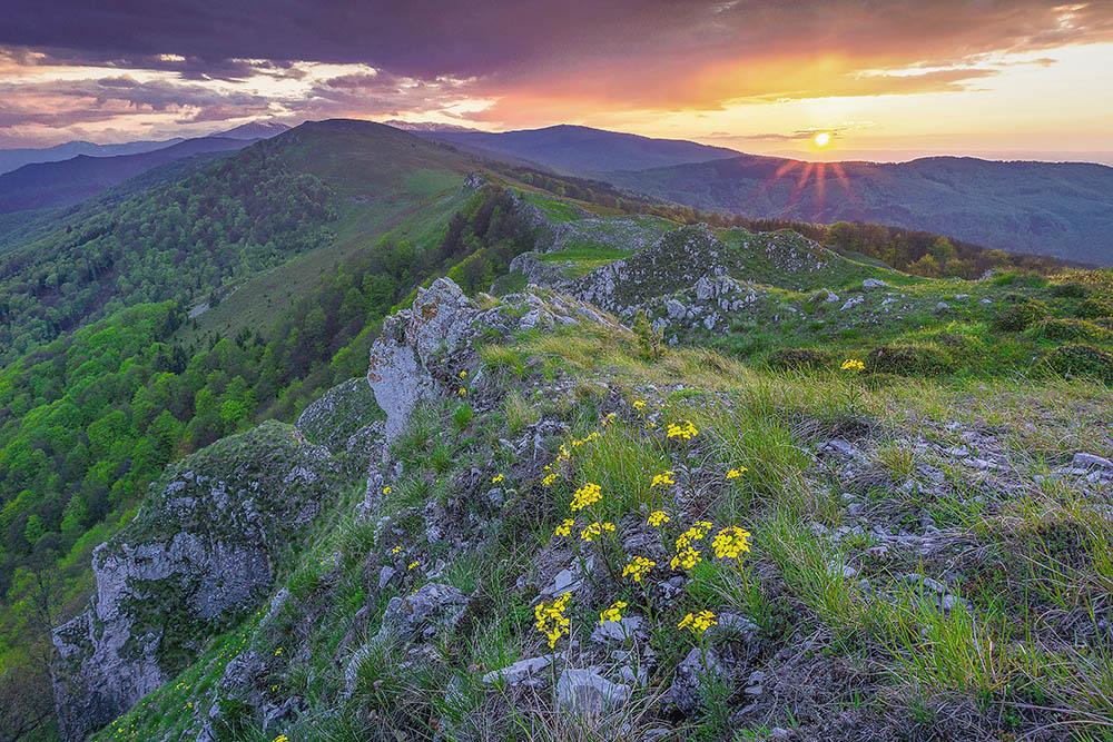 023.3. Tataru Mircea Adrian. Primavara pe pasuni montane (Masivul Oboroca, Muntii Tulisa)