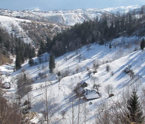 Comșa Bogdan