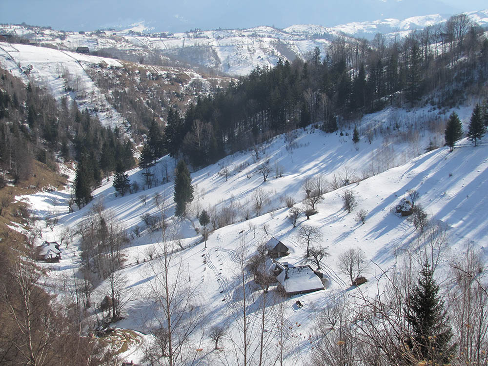 029.2. Comsa Bogdan. Esenta iernii (Moeciu, jud. Brasov)
