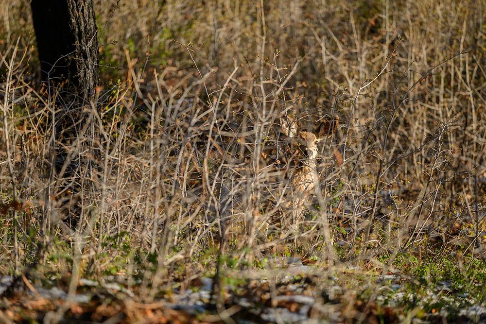039.3. istrate stefan. de-a v-ați ascunselea (zion national park, sua)