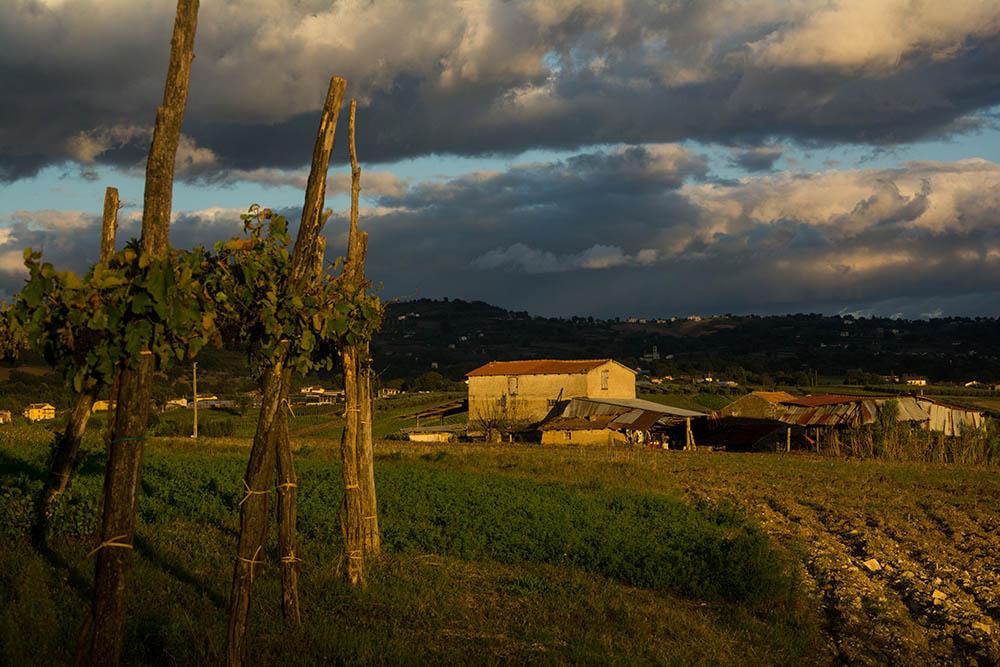 055.3.Moanu Horia. Struguri de lumina (Benevento. Campania, Italia)