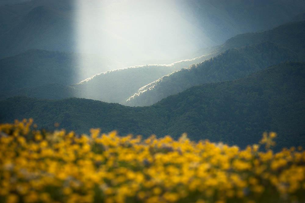 064.1. Bofan Dorin.  Trecator (Parcul Național Buila-Vânturariţa)