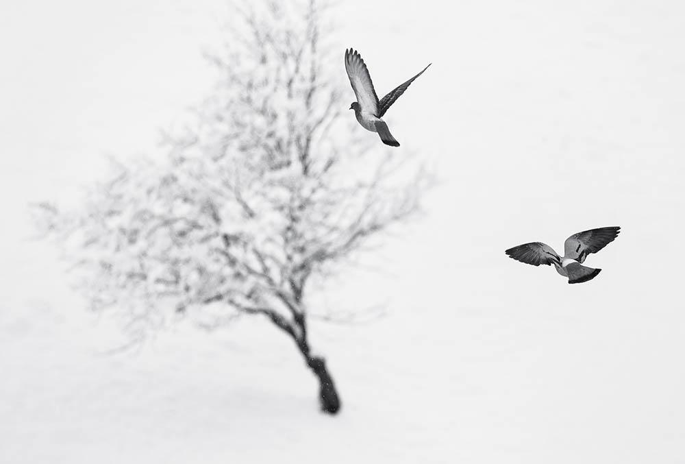 068.3. petrisor adrian. winter flight (munții apuseni )