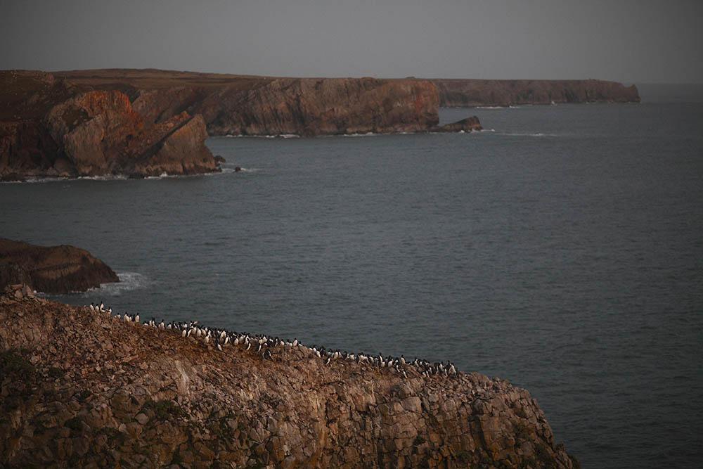 069.2. munteanu catalin. capat de lume (pembroke coast, Țara galilor)