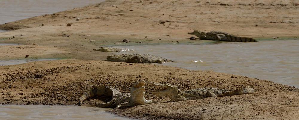 077.2. stancu dora simina. caldura mare (burkina faso, africa)