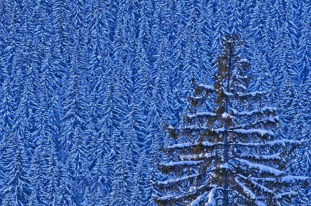 096.2. Isfan Marius Romulus. Before Snow (Muntii Cindrel)