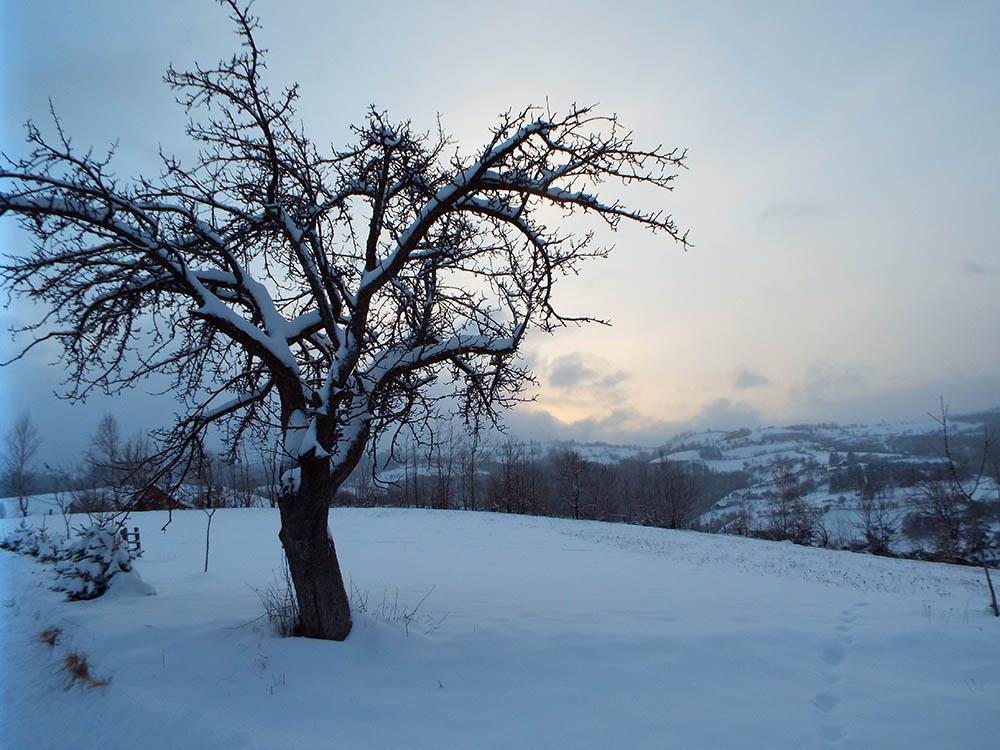 118.1. Serban Adrian Mihai. Falnic stau si infrunt geroasa iarna (Poiana Marului, jud. Brasov)