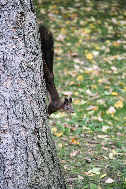 128.1. gligor horia mihai.rita veverița (parcul cetate – deva, jud. hunedoara)