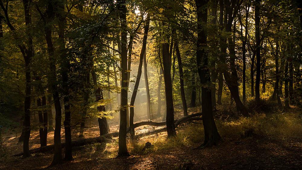 144.1. Darie Adrian Valerica. Light (Pădurea Chizid, Hunedoara)