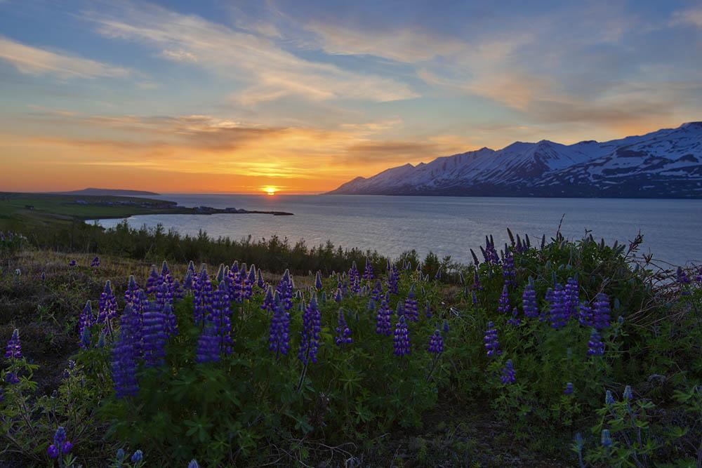 145.1. Bondari Silviu. Iceland (Nordul Islandei)