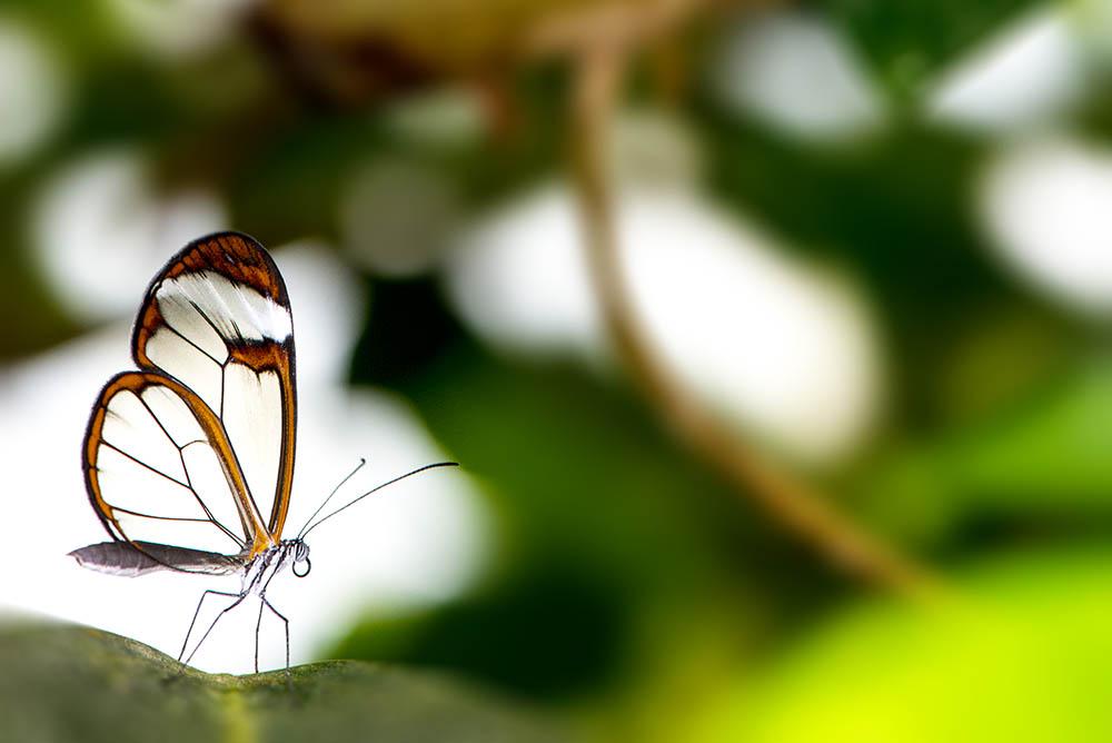145.2. bondari silviu. transparenta (franta)