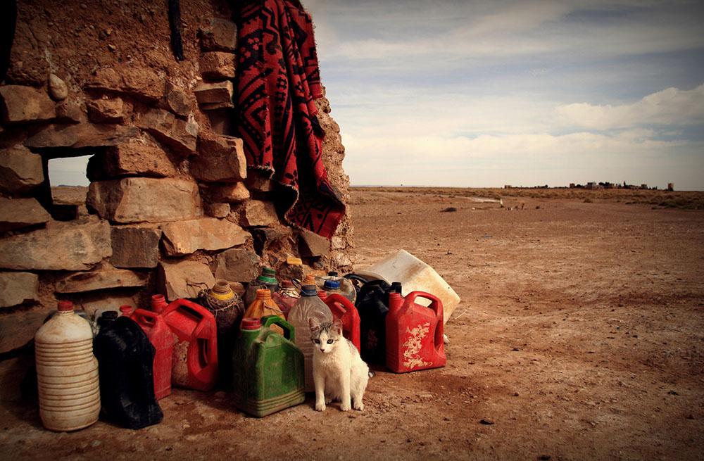 2010 – Fotoreportaj – Premiul 2 – Cristina Țintă-Vass – Lumea deșertului – 2
