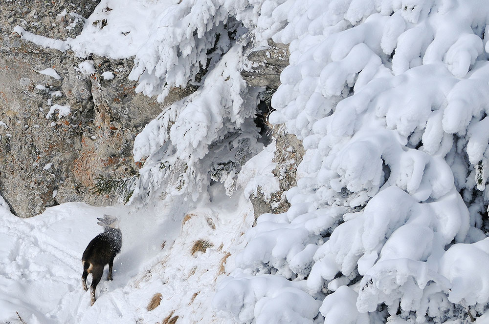 2012 – Fotoreportaj – Premiul 1 – Zoltan Gergely Naghy – Parcul Național Ceahlău (Impresii vizuale) – 2