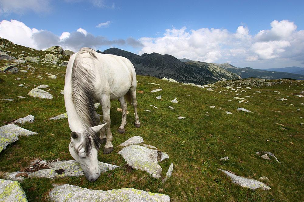 2012 – Fotoreportaj – Premiul 3 – Claudia Tănăsescu – Munții Retezat – 1