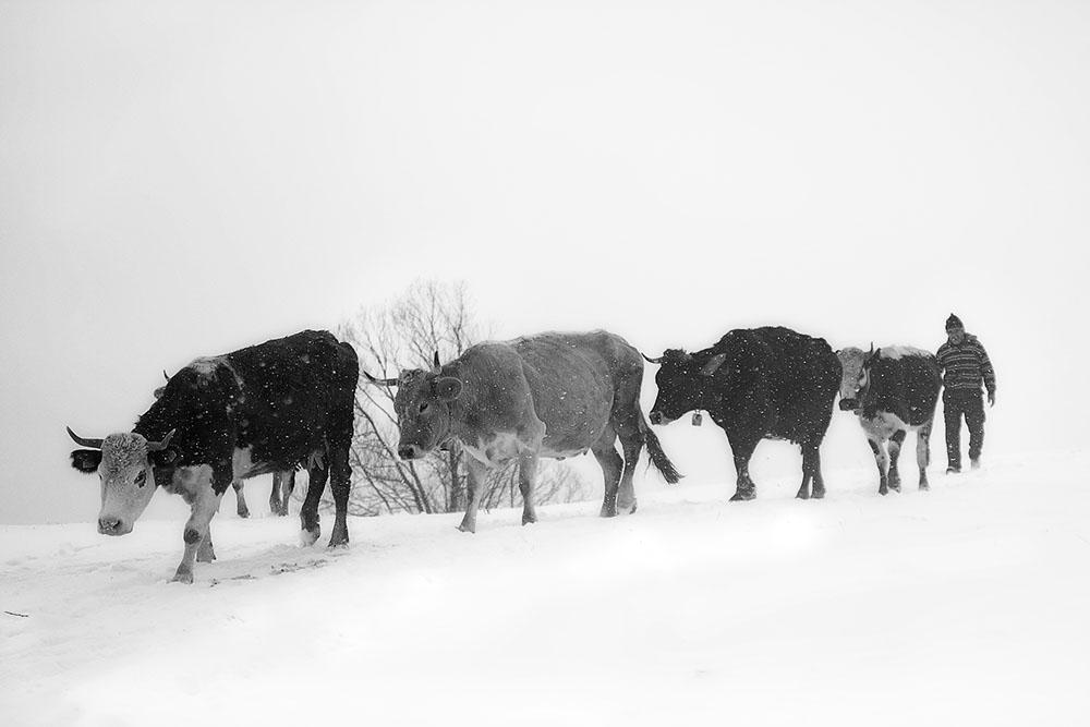 2013 – Fotoreportaj – Premiul 1- Ionescu Cosmin Nicuşor – Satul românesc de munte – 2