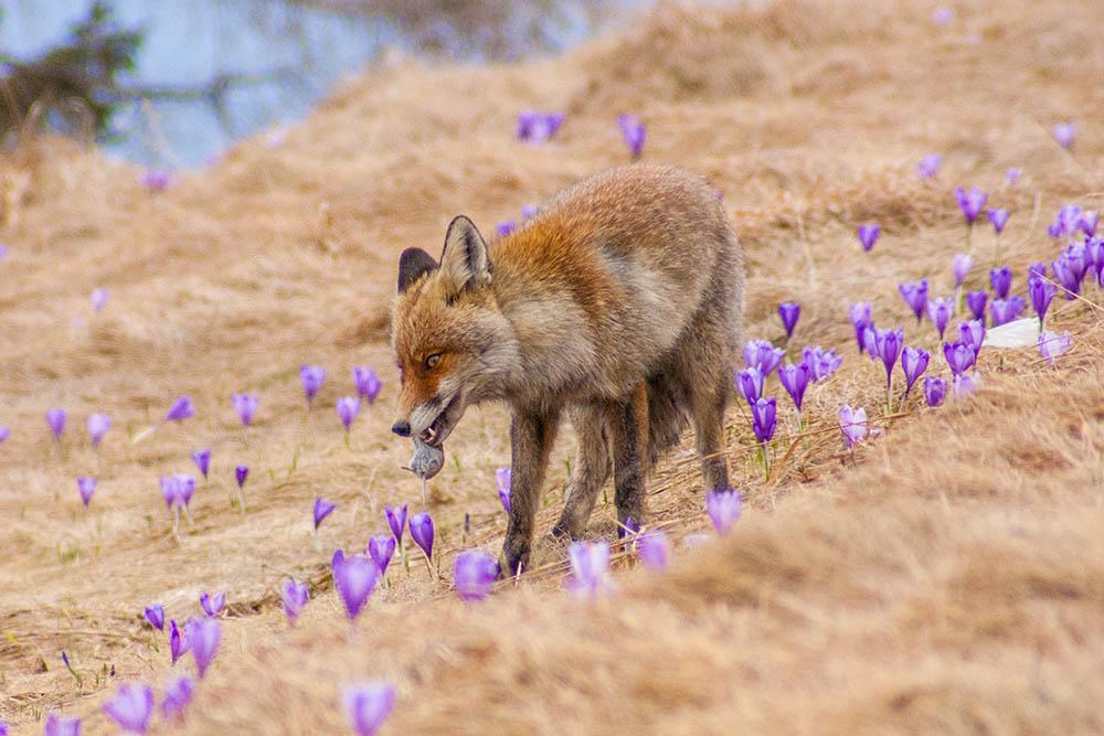 2014 – Wildlife – Premiul 1 – Suheschi Vlad – La cules