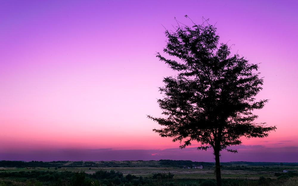 Roman Cristian. Peaceful Tree (Jud. Giurgiu)