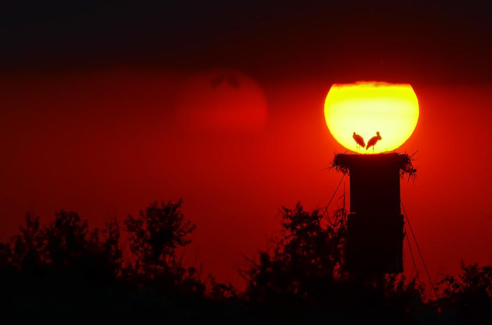 Cojocaru Bogdan. Cuibul din soare (Delta, Sfantul Gheorge)