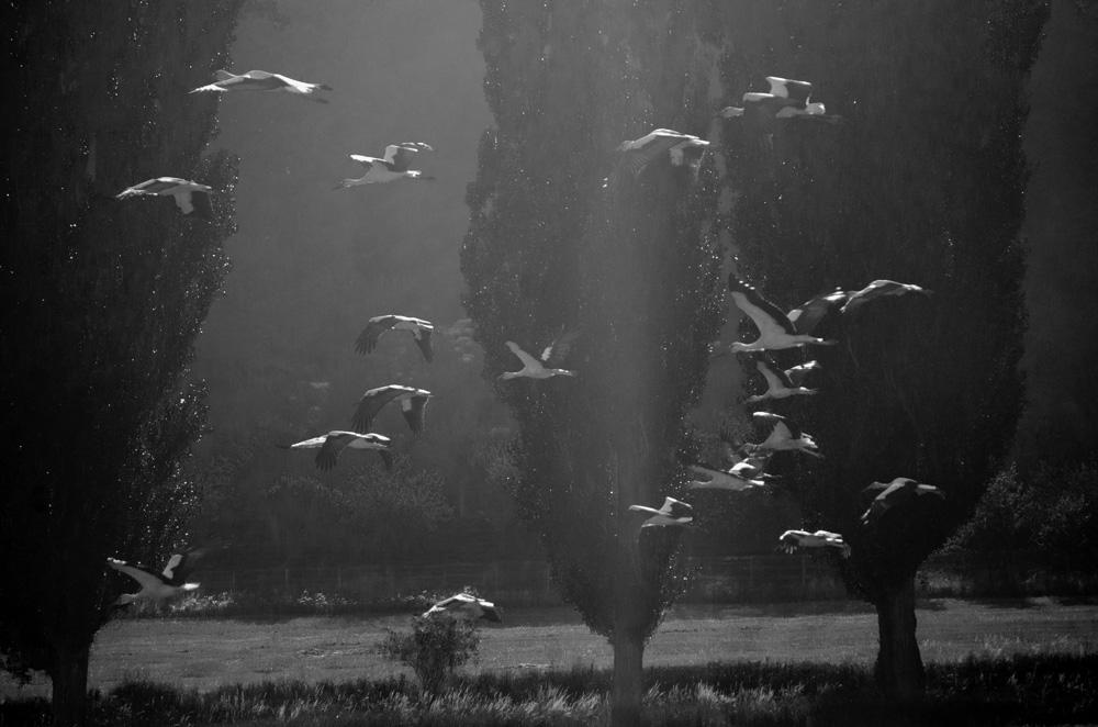 Macovei Cristian. Berze in acvariu (Tescani, judet Bacau)
