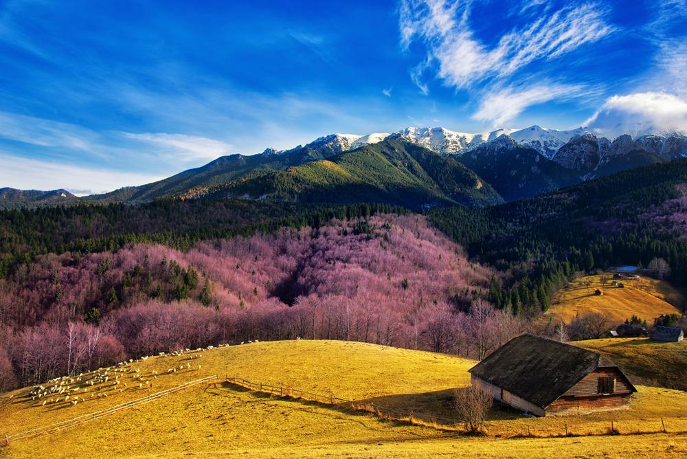 144.3. Dedu Adrian. Peisaj montan (Lângă Schitul Bran, la poalele munților Bucegi)