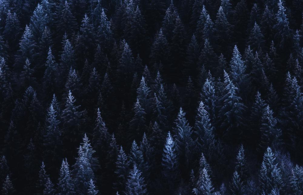 165.1. Stefan Daniel. Muguri de iarna (Pestera)