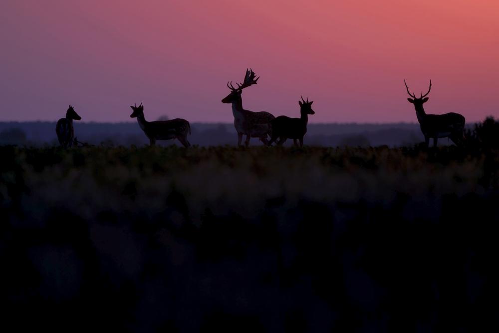 94.2. Mîrlea Daniel. În lumina răsăritului (Pădure de câmpie, România)