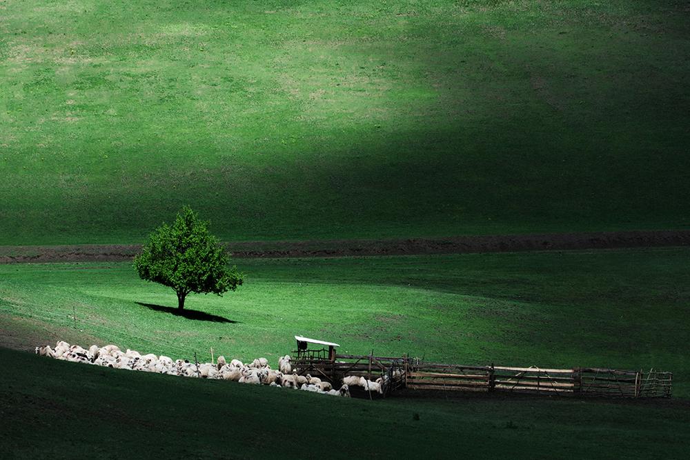 Ștefan Daniel. Verde de păscut (Mureș)