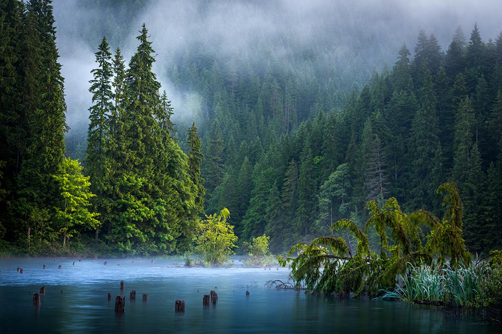 Mențiune. Secțunea peisaj natural. Pîrvulescu Panfil. În mijlocul naturii (Lacul Roșu)