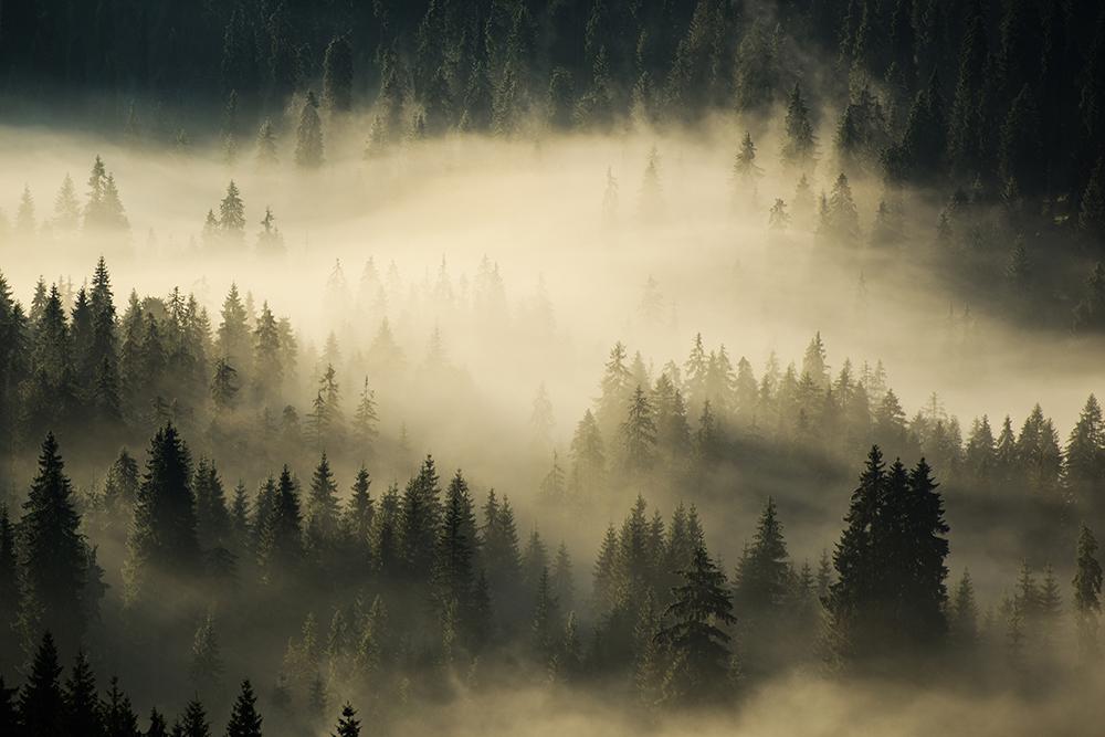 Chirobocea Ștefan. Atmosferă de vis (Munții Ciucaș)