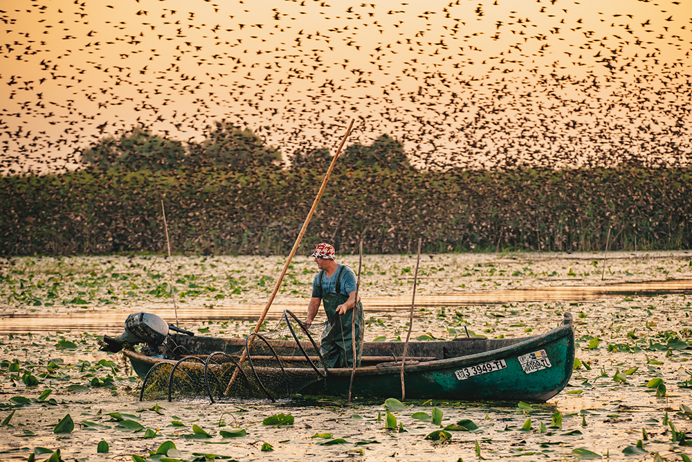 Stan Calin Andrei. Pescar verificand plasele in Delta Dunarii (Lacul Ligheanca, Delta Dunarii)