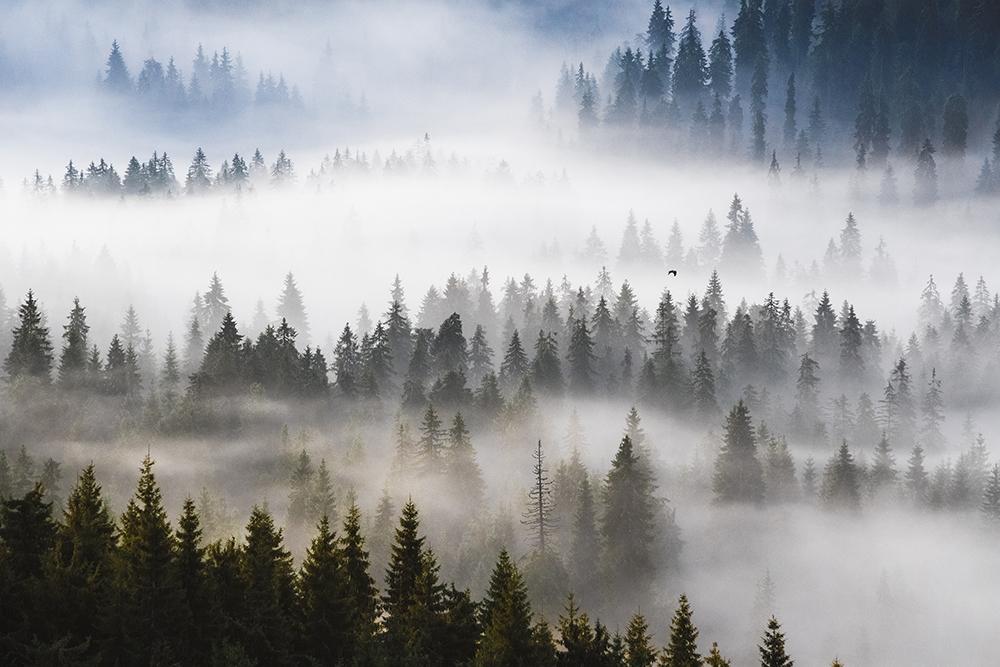 Chirobocea Mihail. Plutire (Padiș, Munții Apuseni)
