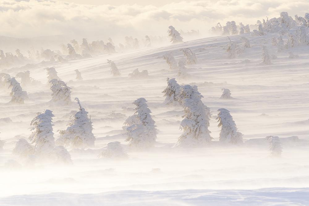 Mîrlea Daniel. Fragment de iarnă (Masivul Vlădeasa)
